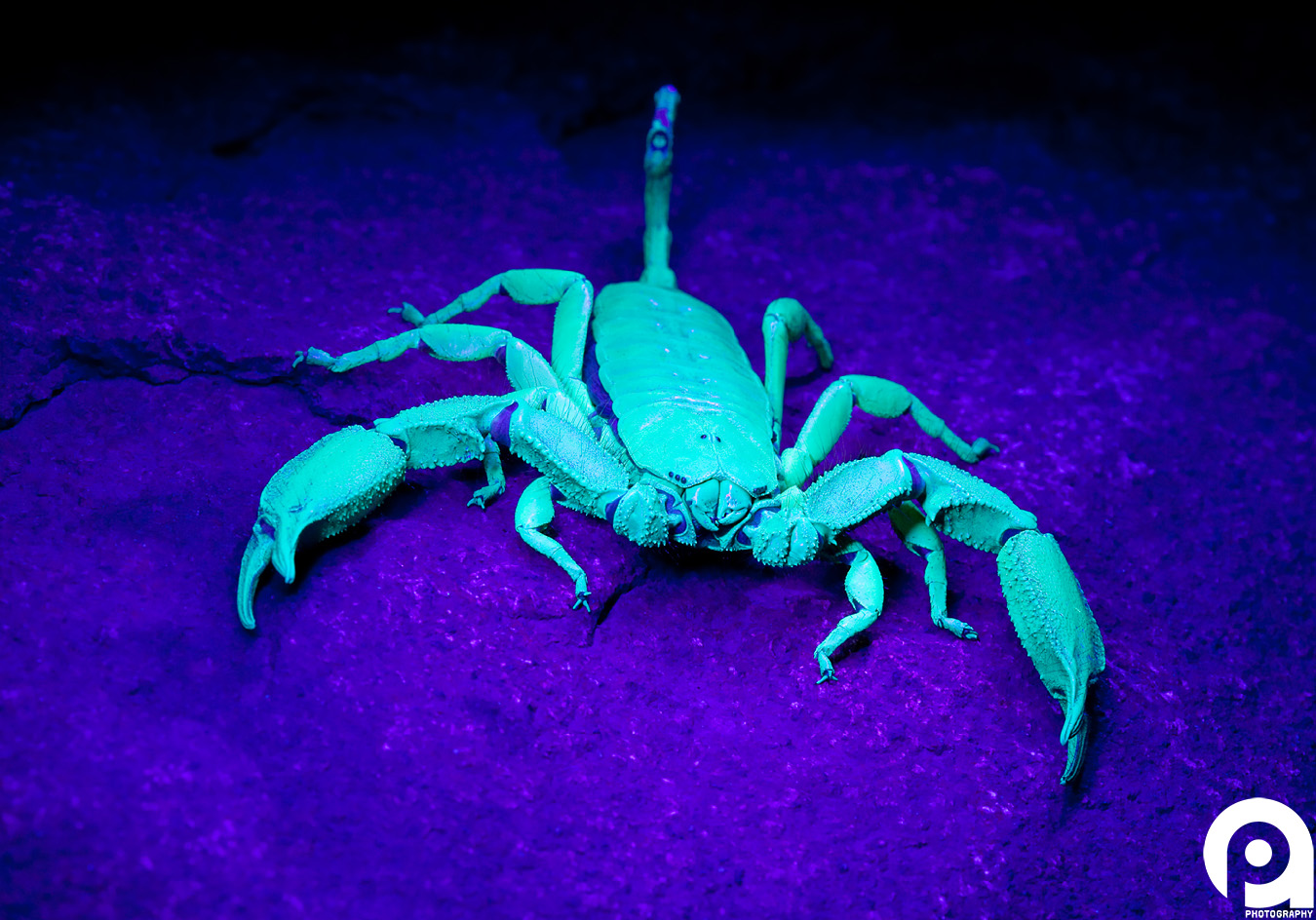 Photography under uv light